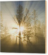 Shining Through Wood Print by Peggy Collins