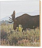 Shiras Bull Moose Wood Print