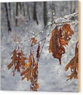 Shivering Oak Leaves Wood Print