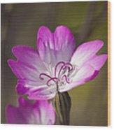 Shocking Pink Chenille Wood Print