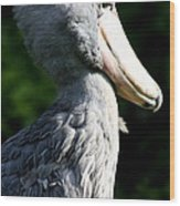 Shoebill Portrait Wood Print