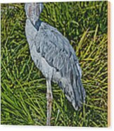 Shoebill Stork Wood Print