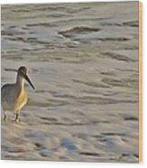 Shore Bird 7 12/5 Wood Print