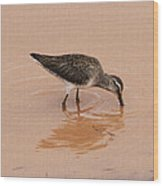 Shore Bird At Whitewater Draw Wood Print