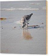 Shore Bird Wood Print