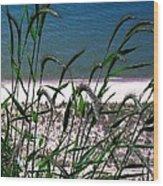 Shore Grass View Wood Print