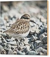 Shorebird Beauty Wood Print