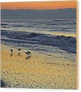 Shorebirds At Dawn Wood Print