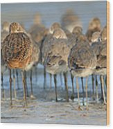 Shorebirds At Flamingo Bay Wood Print