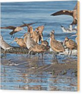 Shorebirds Flocking At Bodega Bay Wood Print