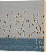 Shorebirds Flying Wood Print