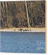 Shoreline Meeting Wood Print