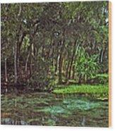 Shoreline. Rainbow Springs. Wood Print