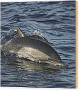 Short-beaked Common Dolphin Sea Wood Print