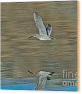 Short-billed Dowitcher And Reflection Wood Print