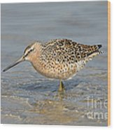 Short-billed Dowitcher, Breeding Wood Print