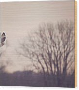 Short Eared Owl At Dusk Wood Print