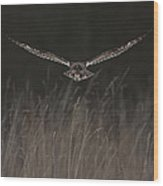 Short Eared Owl Focused Wood Print