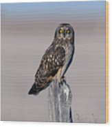 Short Eared Owl Wood Print