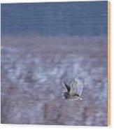 Short Eared Owl Hunting 3 Wood Print