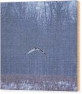 Short Eared Owl In Motion Wood Print