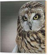 Short Eared Owl Portrait Wood Print