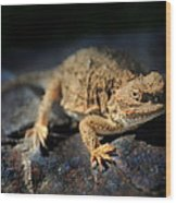 Short Horned Lizard Wood Print