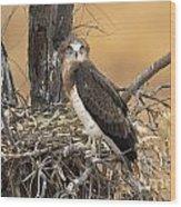 Short-toed Snake Eagle Circaetus Gallicus Wood Print