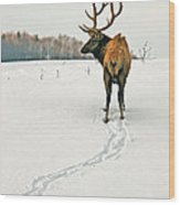 Shortest Distance Elk Wood Print
