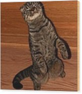 Shorthair Scottish Fold Cat Wood Print