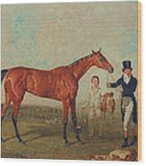 Shoveller Held By Her Trainer Will Chifney Wood Print by Benjamin Marshall