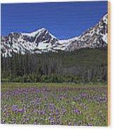 Showy Penstemon Wildflowers Sawtooth Mountains Wood Print