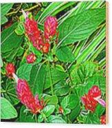 Shrimp Bloom Wood Print