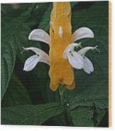 Shrimp Flower Wood Print