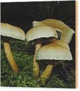 Shrooms Wood Print
