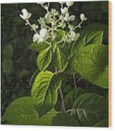Shrub With White Blossoms Wood Print
