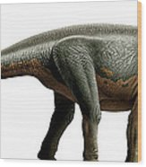 Shunosaurus, A Genus Of Sauropod Wood Print