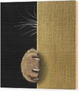 Shy Cat ... Wood Print