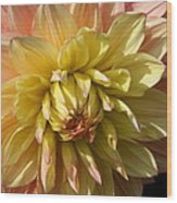 Shy Dahlia Beauty Wood Print