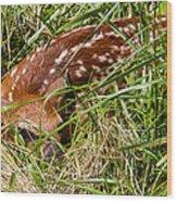 Shy Fawn In Meadow Wood Print