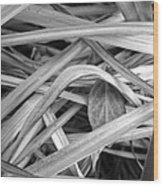 Shy Leaf Wood Print