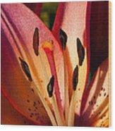 Shy Pink Lily Wood Print