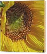 Shy Sunflower Wood Print