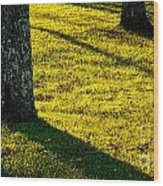 Shyness Wood Print