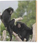 Siamang Monkeys Wood Print