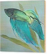 Siamese Fighting Fish Wood Print by IM Spadecaller