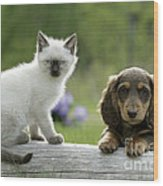 Siamese Kitten And Dachshund Puppy Wood Print