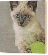 Siamese Kitten Wood Print