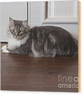 Siberian Forest Cat Wood Print