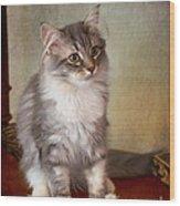 Siberian Forest Kitten II Wood Print